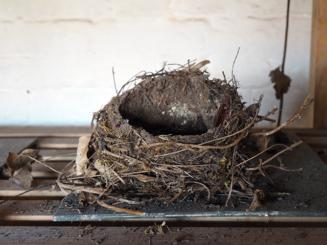 Berrington Hall - Birds Nest