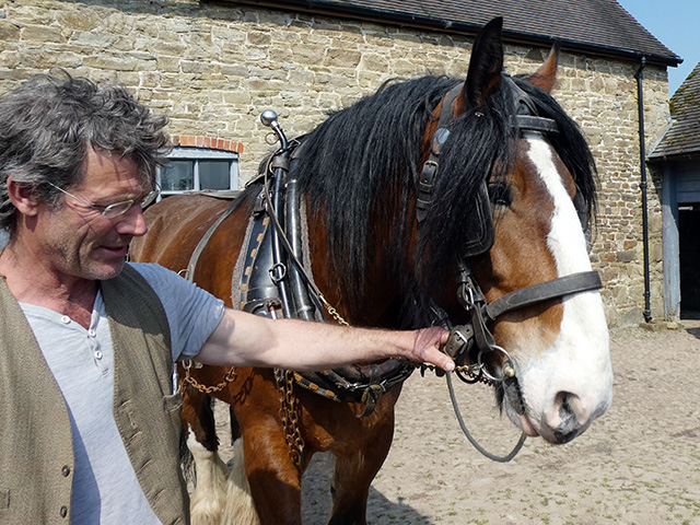 Simon with one of the Shire horses.