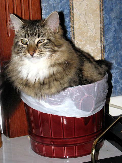 Leo sitting in the bin!