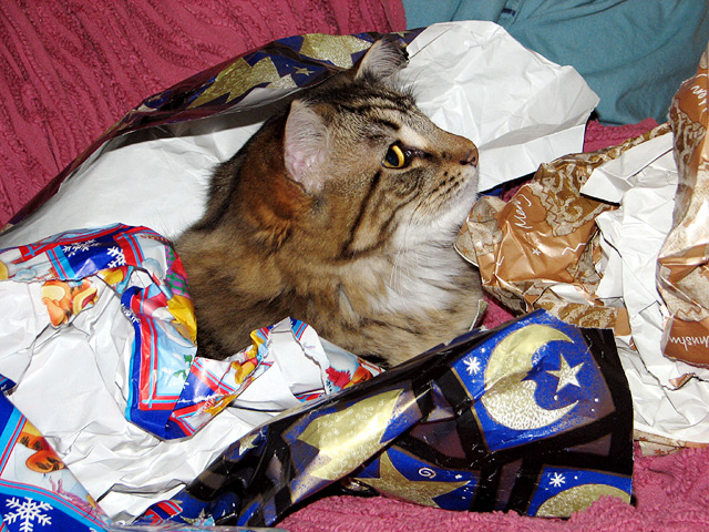 Leo's first Christmas amongst the wrapping paper.