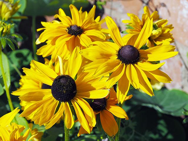 Flowers at Croft Castle.