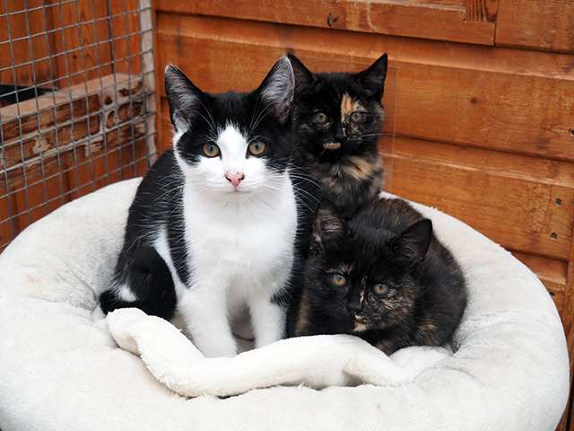 Three kittens at Shropshire Cat Rescue.
