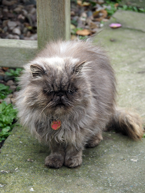 Mandy, a cat with cattitude!