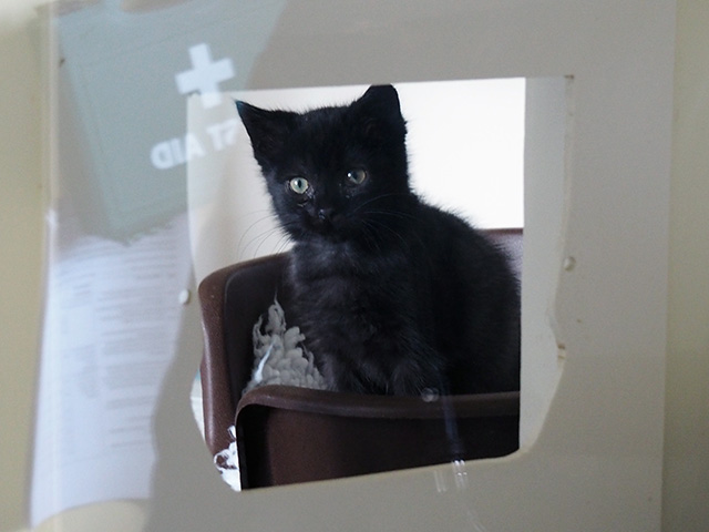 Little black kitten.