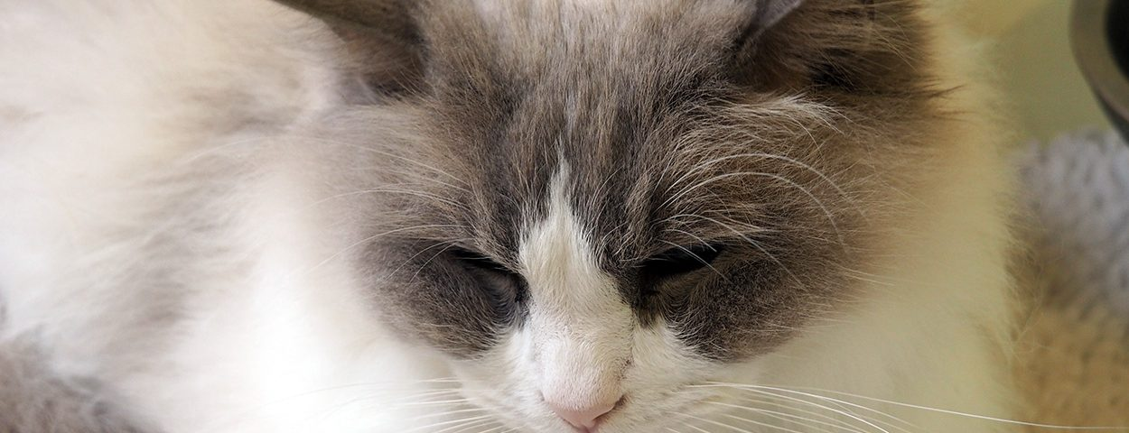 Shropshire Cat Rescue
