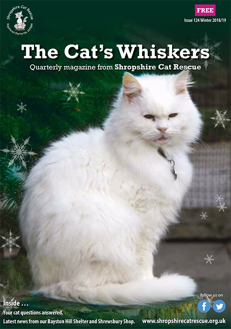 Bernard, the cover star of The Cat's Whiskers!