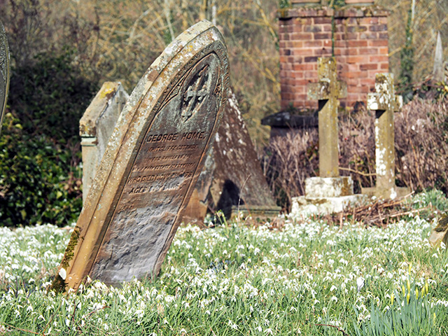 A gravestone surrounded by a carpet of snowdrops.
