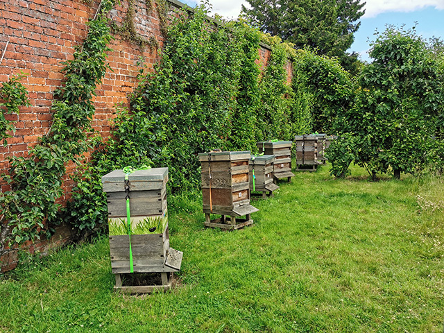 Beehives at Erddig.