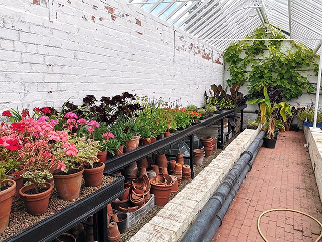 A greenhouse at Erddig.