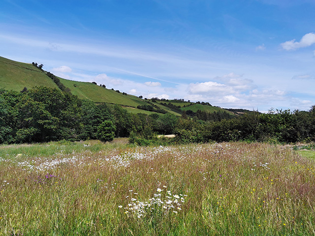 The meadow at Ceunant, Llanidloes.