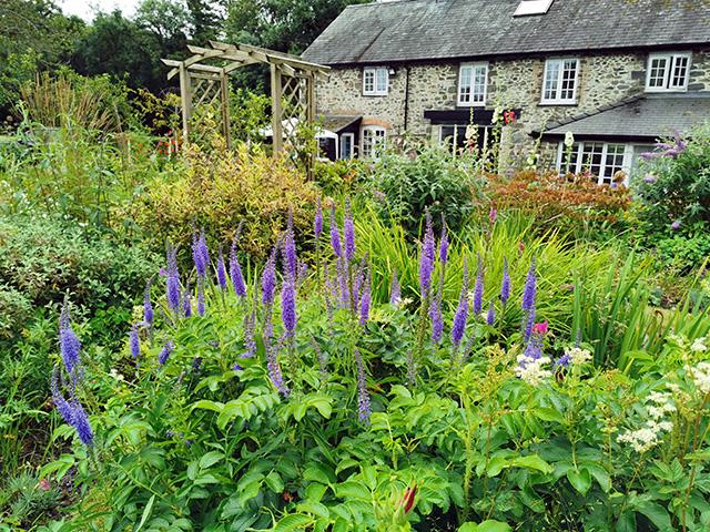 A cottage garden.