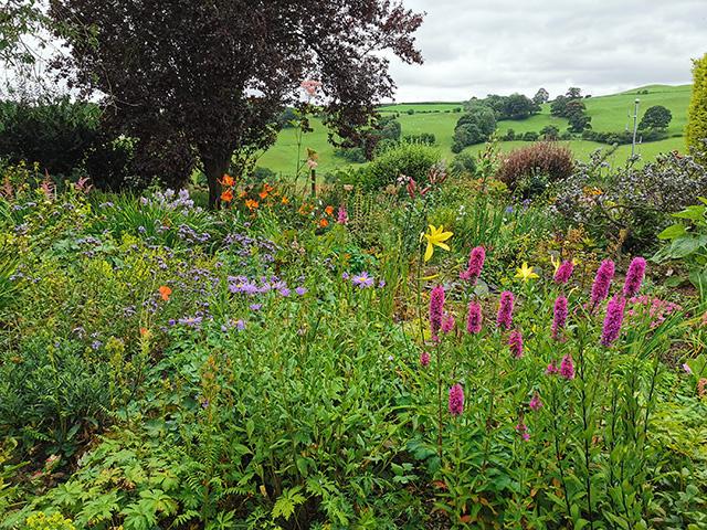 The garden at Fraithwen.