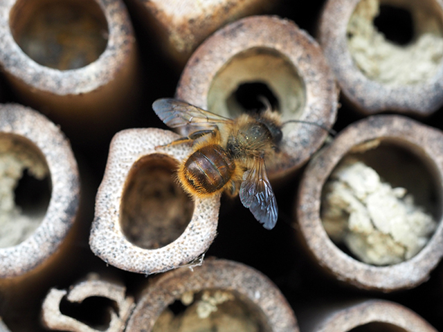 A bee at the bug hotel.