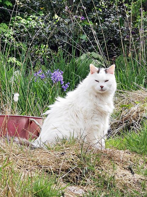 Charlie, next door's cat.