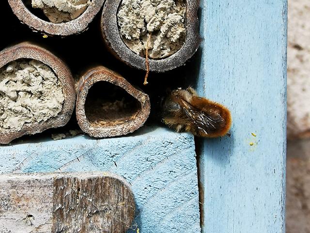 Bee free.