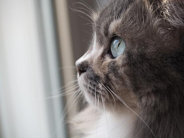 Sugar watching the birds.