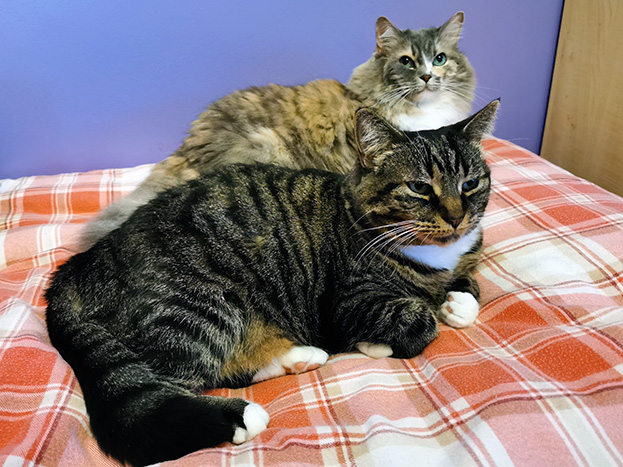 Silky and Sugar lying on the bed.