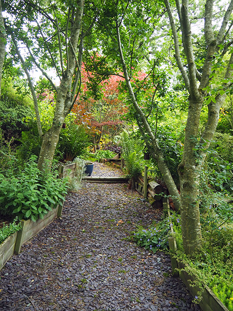 A path in the garden at Rock House.