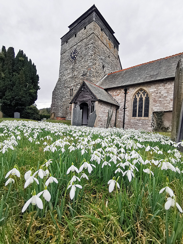 Snowdrops in front of the church from a low angle.