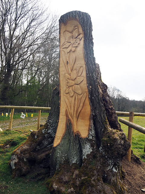 Two daffodils carved into a tree stump.