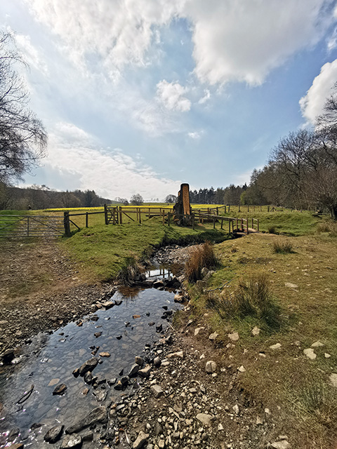 A stream and little bridge leading to the field of daffodils.