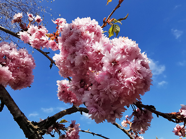 Blossom at Tranquility Haven.