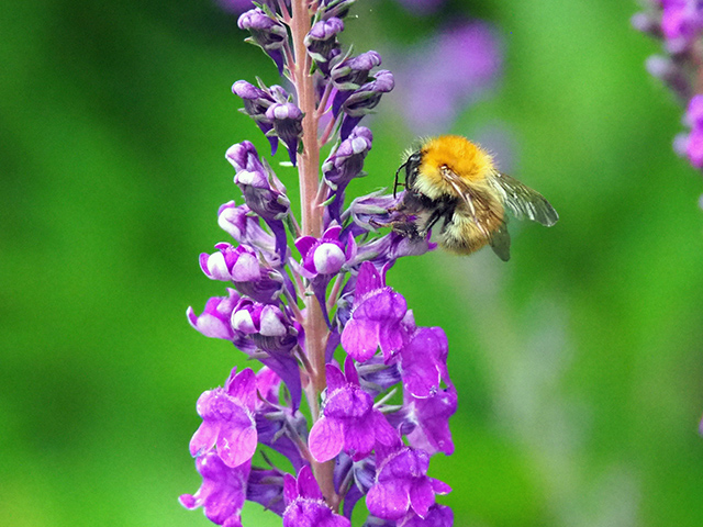 Bee on plant.