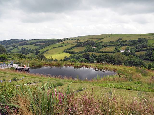 The wild swimming pond at Welsh Lavender.