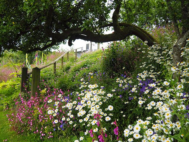 Wild flower garden area.